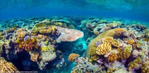 CLUB GIGGLE great-barrier-reef-corals-300x148 The Seven Natural Wonders Of The World