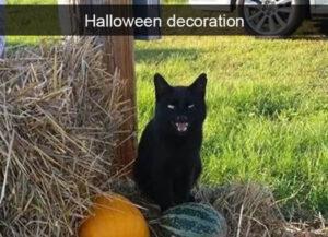 CLUB GIGGLE halloweenblackcat-300x217 Cats Causing Mayhem!