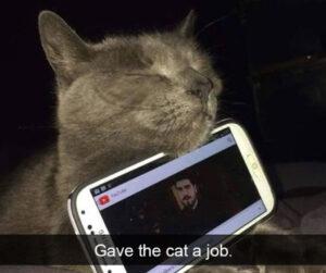 CLUB GIGGLE phone-cat-300x251 Cats Causing Mayhem!