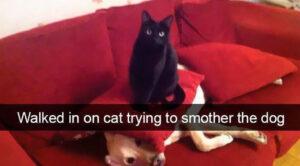 CLUB GIGGLE smother-cat-78828-18962-300x166 Cats Causing Mayhem!