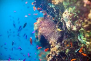 CLUB GIGGLE the-great-barrier-reef-seven-natural-wonders-of-the-world-300x200 The Seven Natural Wonders Of The World