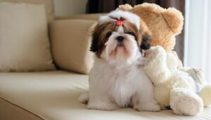 CLUB GIGGLE Shih-Tzu-300x171 Top Ten Dogs That Are Awesome for Seniors
