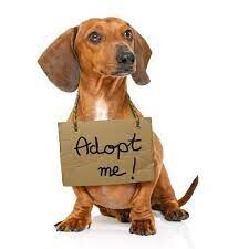 CLUB GIGGLE adoptapet Bucket List Ideas for Adults (Part 3)