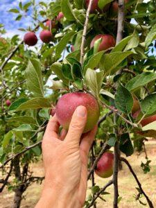 CLUB GIGGLE apple-picking-225x300 Fall Bucket List 2021