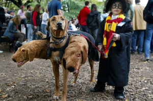 CLUB GIGGLE harrypotter2costume-75991-300x198 These 35 Costumes Have Completely Won the Spooky Season!